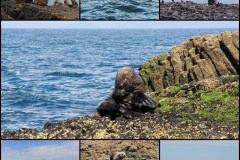 Aust Fur Seals, Stanley